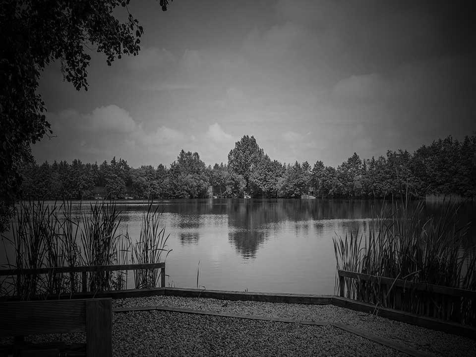 Nuddock Wood Swims